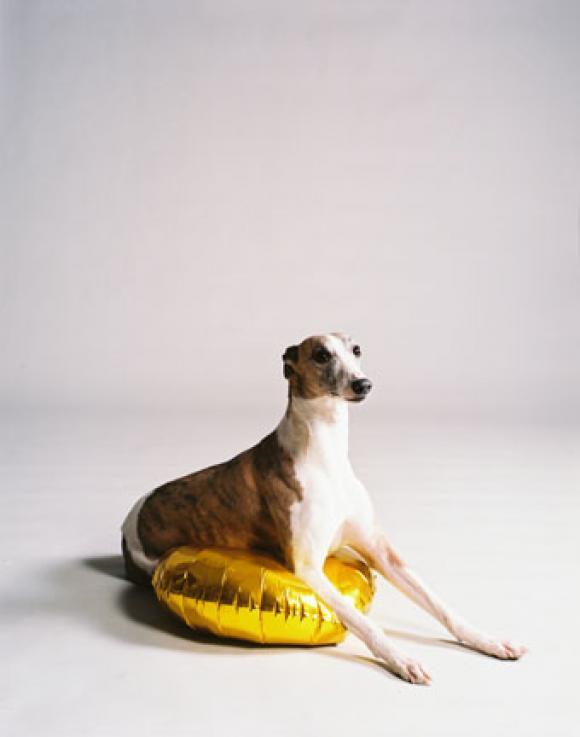 Nadin Maria Rüfenacht, Hund mit goldenem Ballon, 2009
