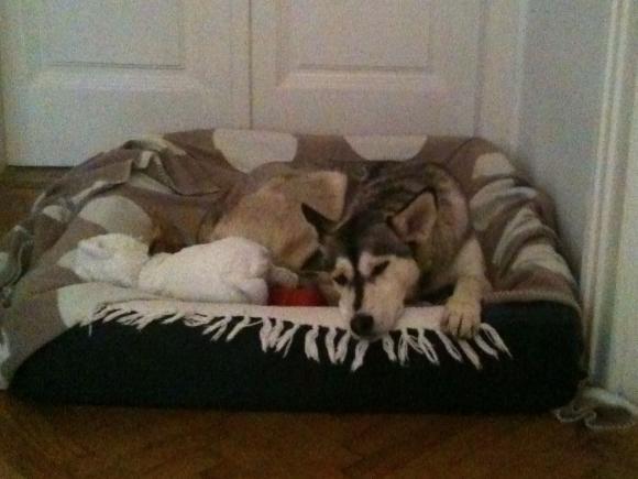Im eigenen Bettchen