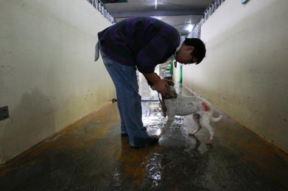 Begrüßen und Streicheln auf dem Tierheimgang, ein Foto, dann wird der Hund umgeb