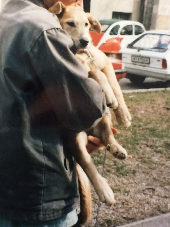 Lucy als Welpe, 1996, Foto: Petra Hartl