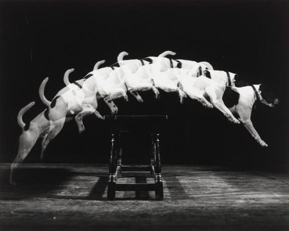 Harold Edgerton, Jackie Jumps a Bench, 1938 © 2015 Estate of Harold Edgerton