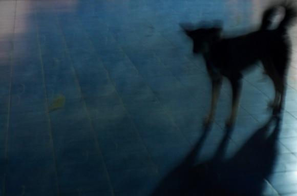 aus der Serie: Je suis le Chien errant sur la Terre #2 & #3 © Corinne Rozotte