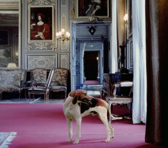 Karen Knorr, Leader of the Pack