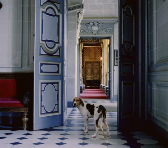 Karen Knorr, Morning