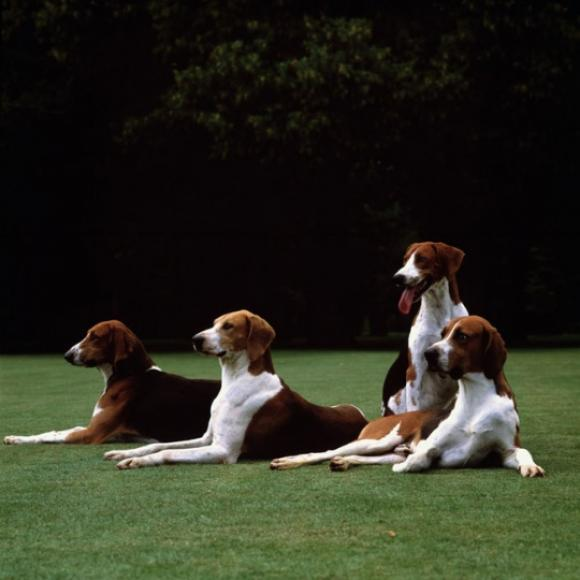 Karen Knorr, Vibrayes Dogs