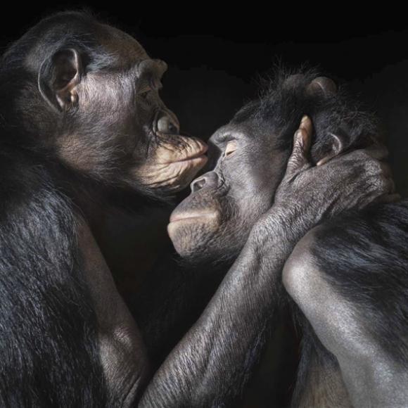 Kiss © Tim Flach