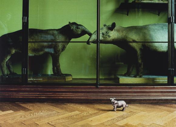 Peter Dressler, Mit großem Interesse, Naturhistorisches Museum 1989 © Fotohof Ar