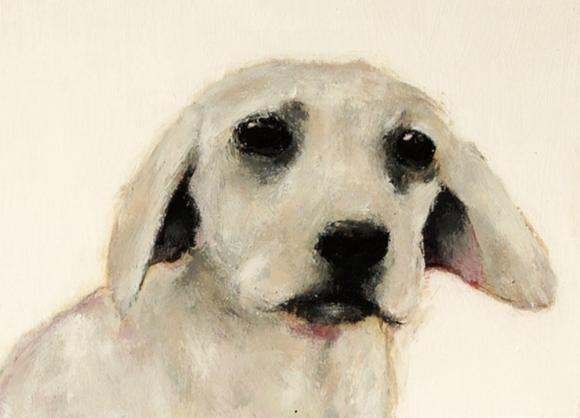 Labrador Leoni © Wilma Wau