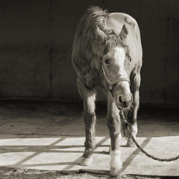 Handsome © Isa Leshko