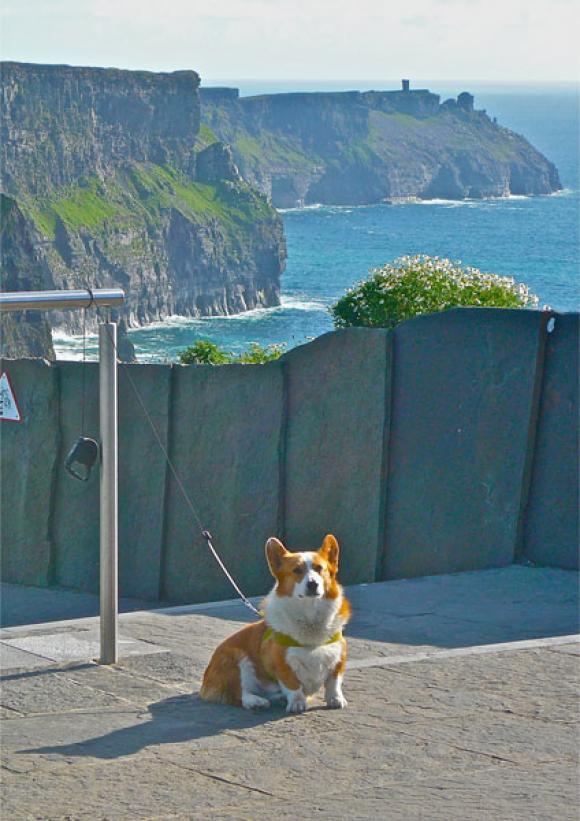 Clément in Irland vor den Cliffs Of Moher, Foto von derstandard.at
