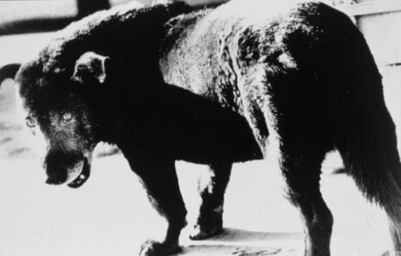 Daido Moriyama,Stray Dog, 1971