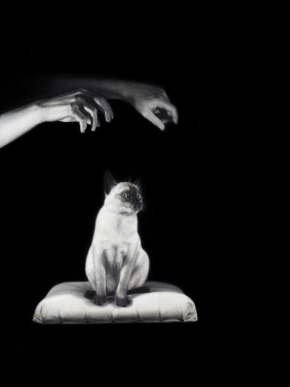 Mysterious Pair of Hands Hypnotiz a Siamese Cat, 2020 © Drago Persic