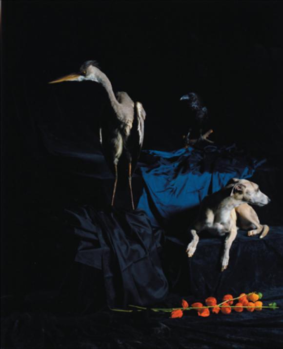 Nadin Maria Rüfenacht, Nature morte, Hund mit Reiher, 2005