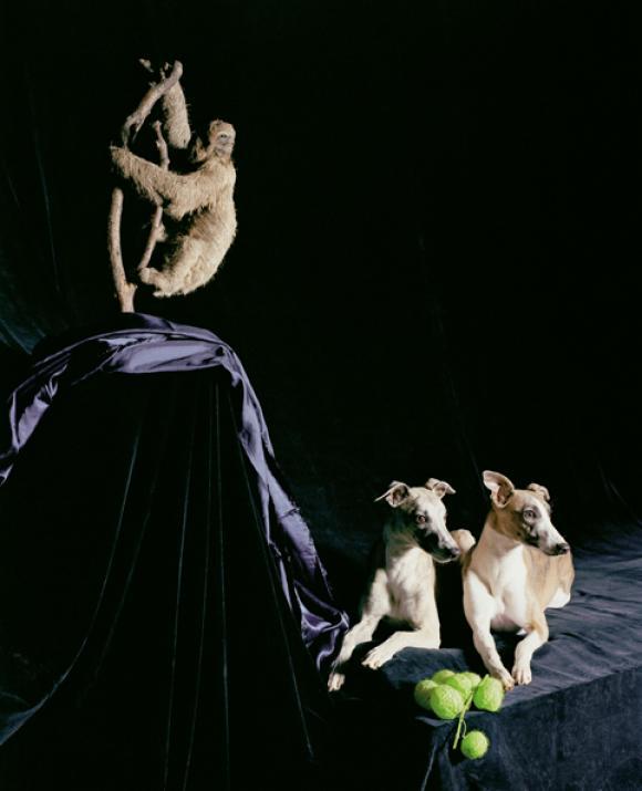 Nadin Maria Rüfenacht, Nature morte, Zwei Hunde mit Faultier, 2005