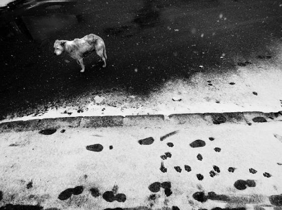 o.T. © Tamás Hajdu