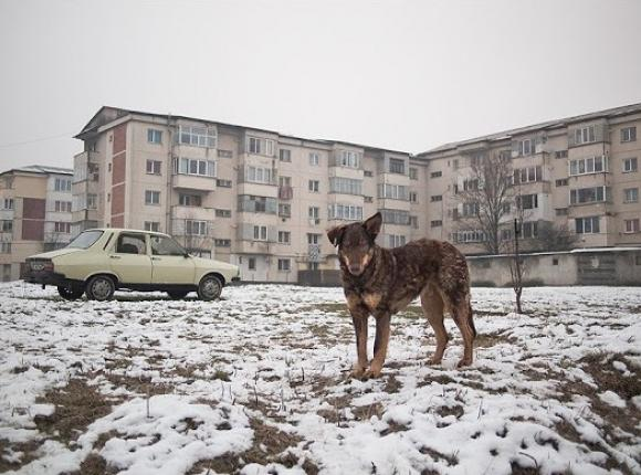 o.T., 2011 © Tamás Hajdu