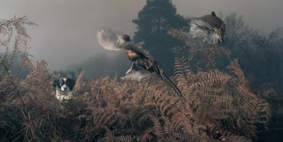 Penny working the bracken © Tim Flach