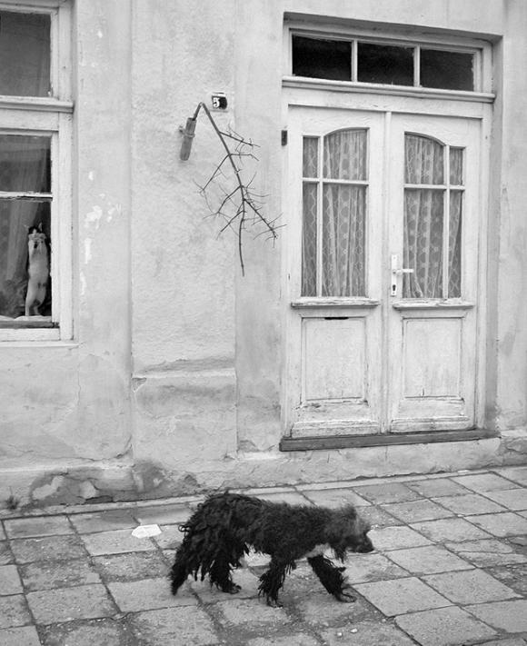 Pentti Sammallahti, Belogradchik, Bulgarien, 2003, © Pentti Sammallahti