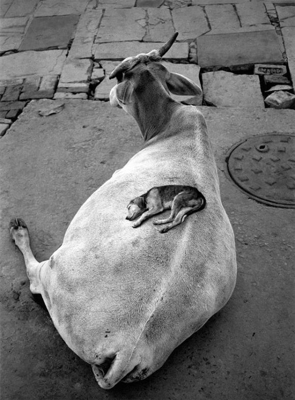 Pentti Sammallahti, Varanasi, Indien, 1999, © Pentti Sammallahti, Kehrer Verlag