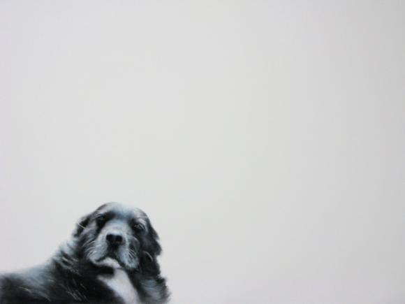 Dog © Peter Haslam Fox