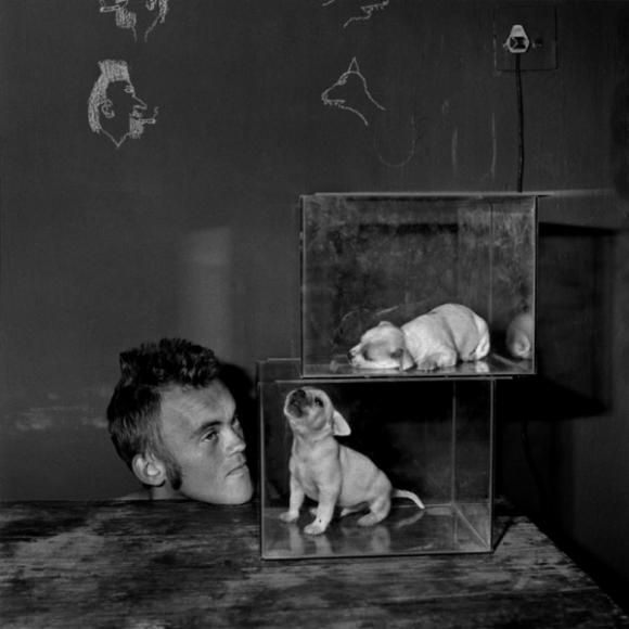 Roger Ballen, Shadow Chamber, Puppies In Fishtanks, 2000