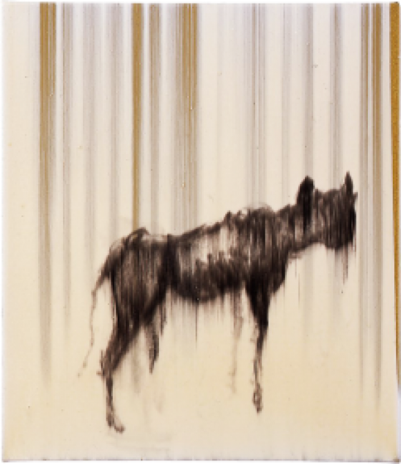 Rachel Howard, Warrior Dog