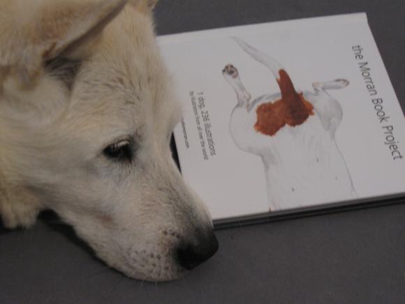 Rocco liest in Morran © Petra Hartl