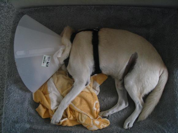 Nach einer Operation, Foto: Petra Hartl