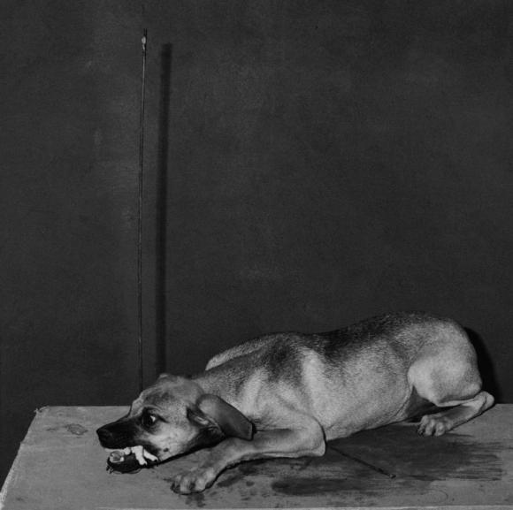 Roger Ballen, Shadow Chamber, Hungry Dog, 2003