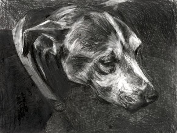 Rusty, 2011 © Colleen