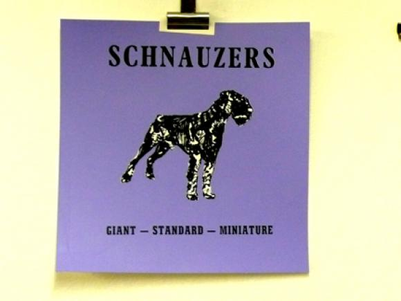 Rob Clarke, S is for Schnauzer