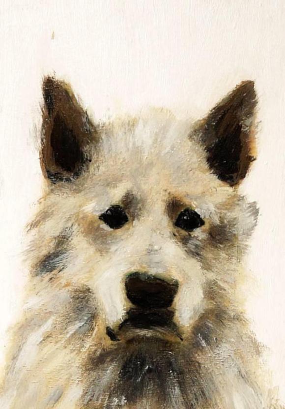 Schäferhund George © Wilma Wau