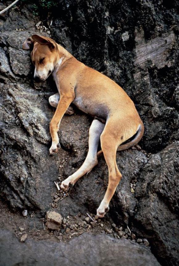 Gabriel Orozco, Perro durmiendo, Sleeping dog, 1990