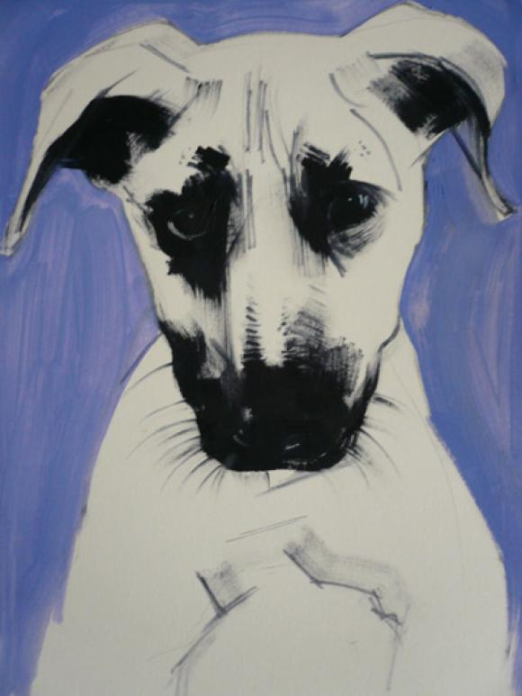 Staffie © Sally Muir