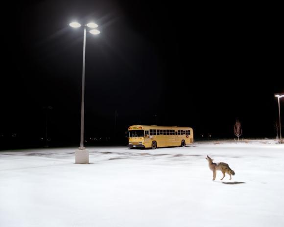 Howl © Amy Stein