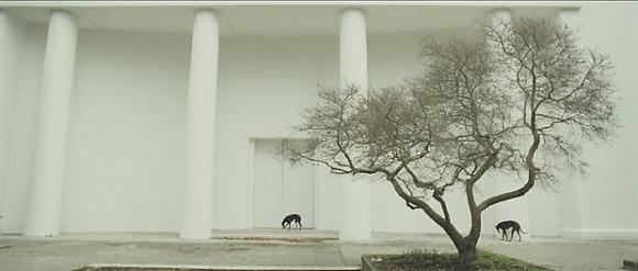 Steve McQueen, Giardini, 2009