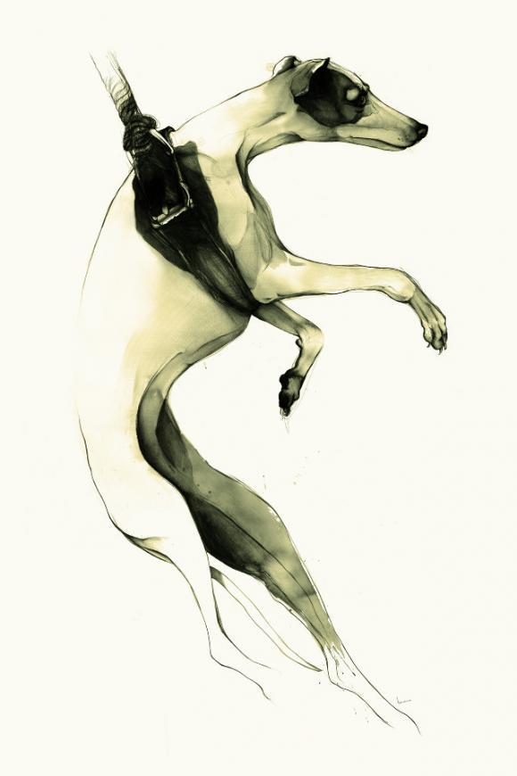 Suspended Greyhound © Kareena Zerefos