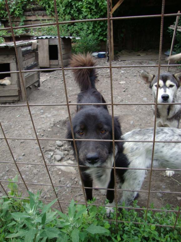 Tashi und Hedy im rumänischen Tierheim Reghin