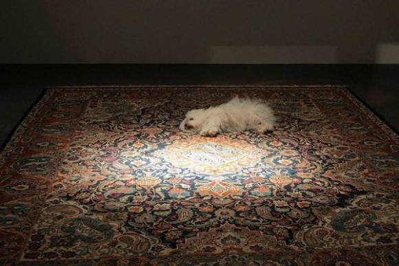 Hund auf der Art Basel