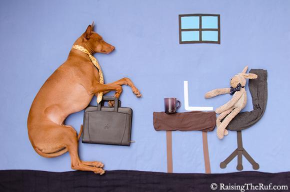 This week I've been working like a dog. TGIF!!!! © RaisingTheRuf.com