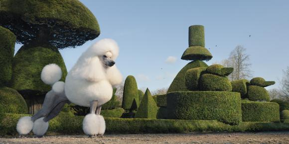 Topiary © Tim Flach