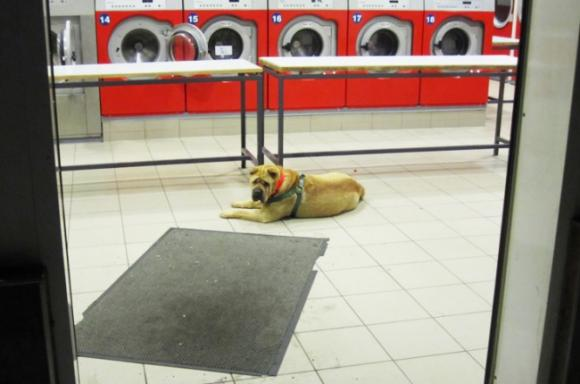 Wartende Hunde © Barbara Wrede