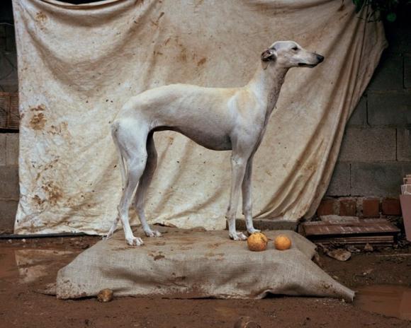 White Galga © Martin Usborne