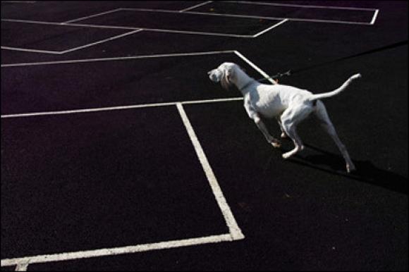 whitedogfever @ Nils Jorgensen